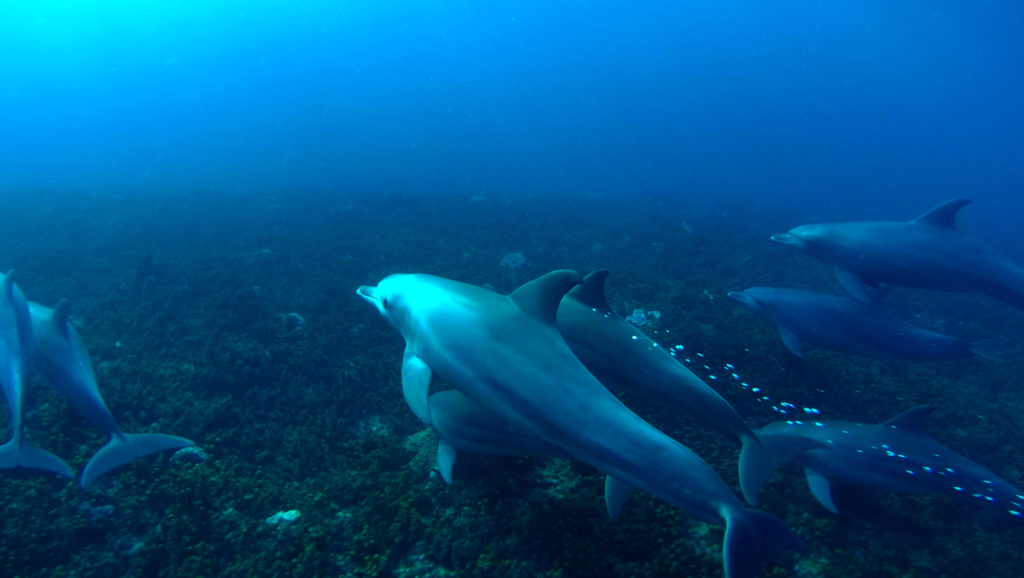 Bagno con i delfini a Kizimkazi, Zanzibar