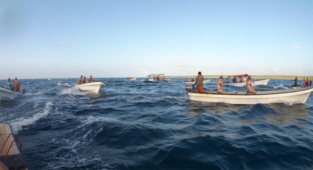 Le imbarcazioni a caccia di delfini
