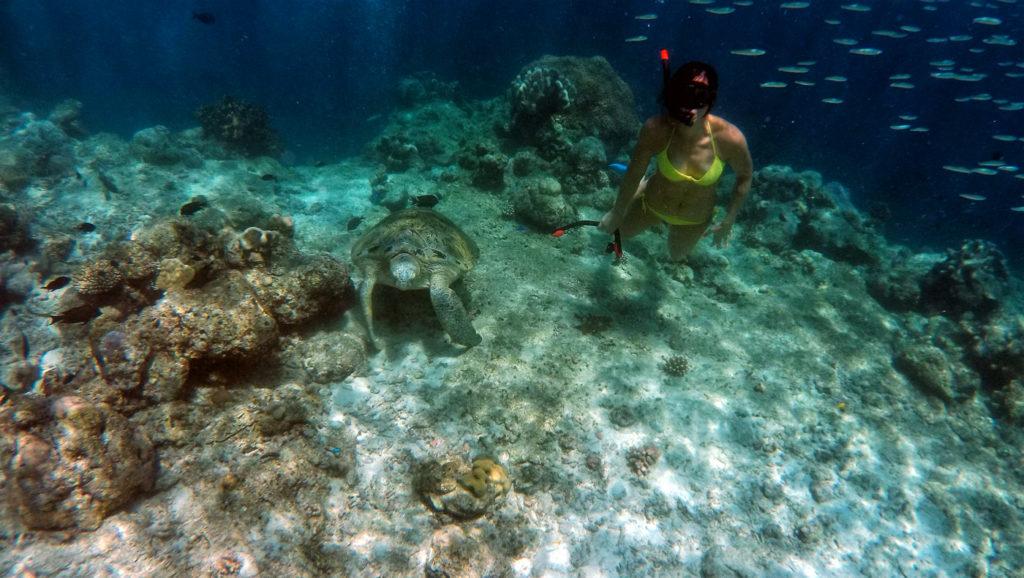 Snorkeling a Sipadan