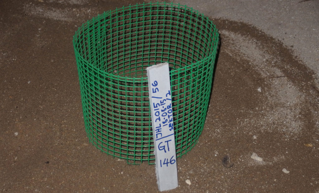 Le uova di tartaruga raccolte e depositate nella nursery
