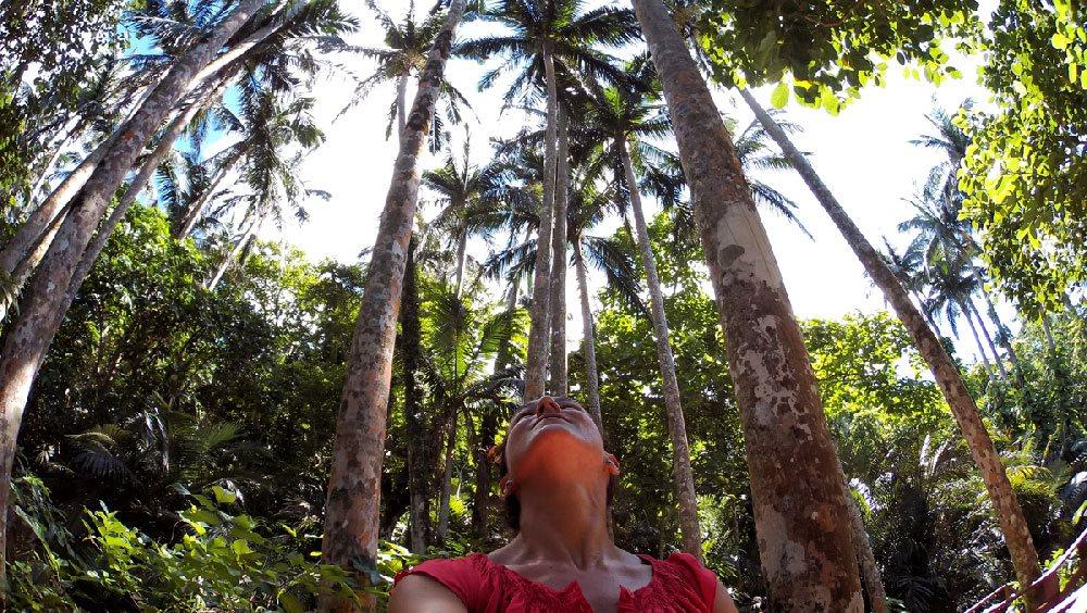 Foresta di palme Yaeyama