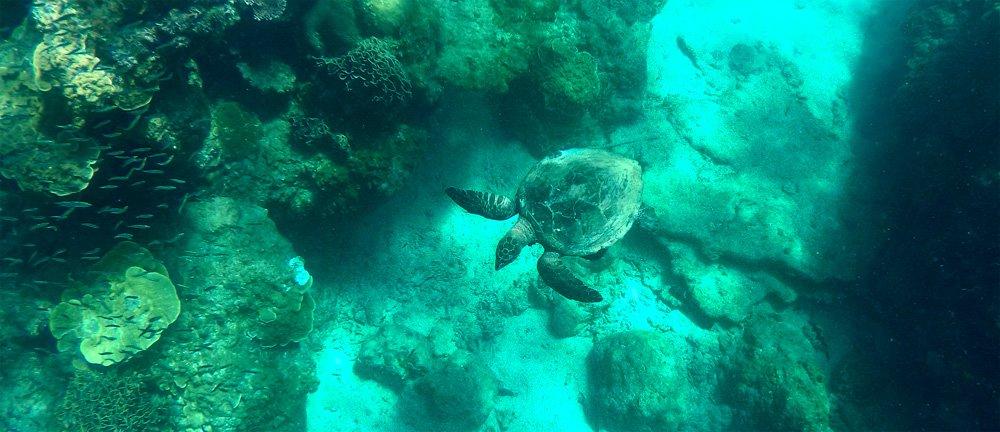 Snorkeling a Redang