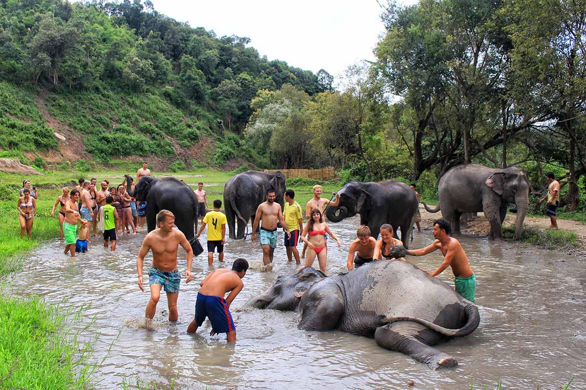 Bagno elefanti Chiang Mai Santuario Elefanti