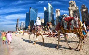 La spiaggia di Dubai Marina: mare, cammelli e grattacieli