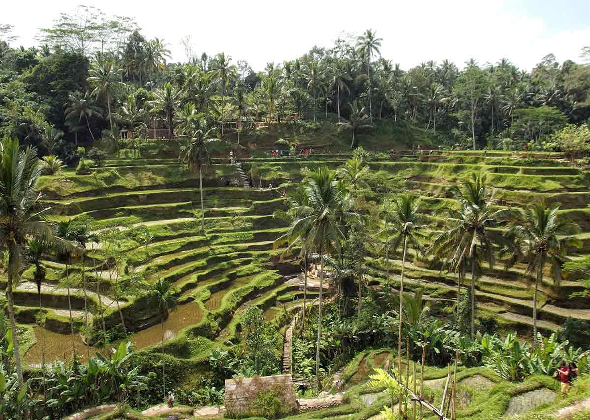 Le terrazze di riso di Ubud