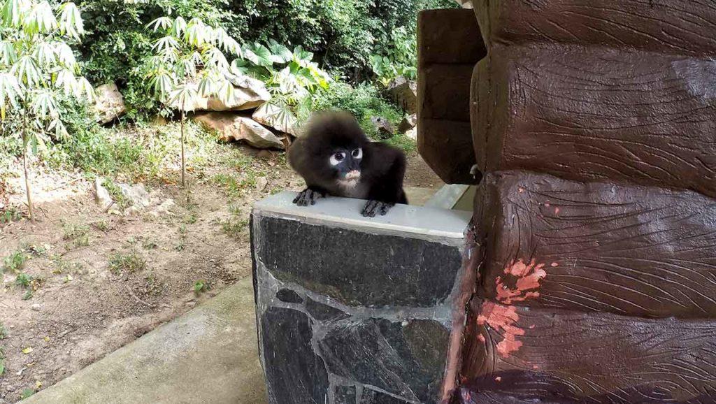 Scimmia all'Ang Thong National Park