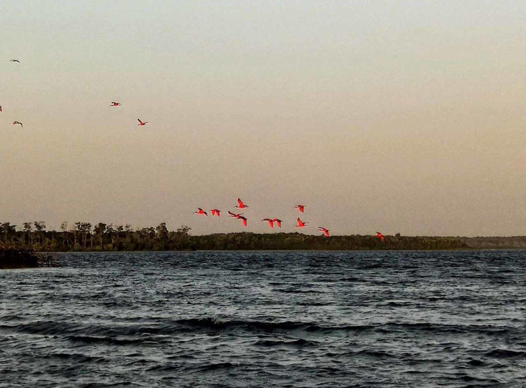 Il volo degli ibis rossi (Brasile, Delta das Americas)