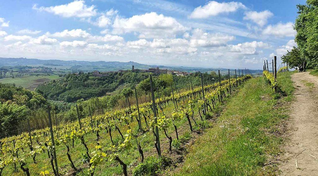 La breve passeggiata tra le vigne che porta alla Big Bench di Rosignano