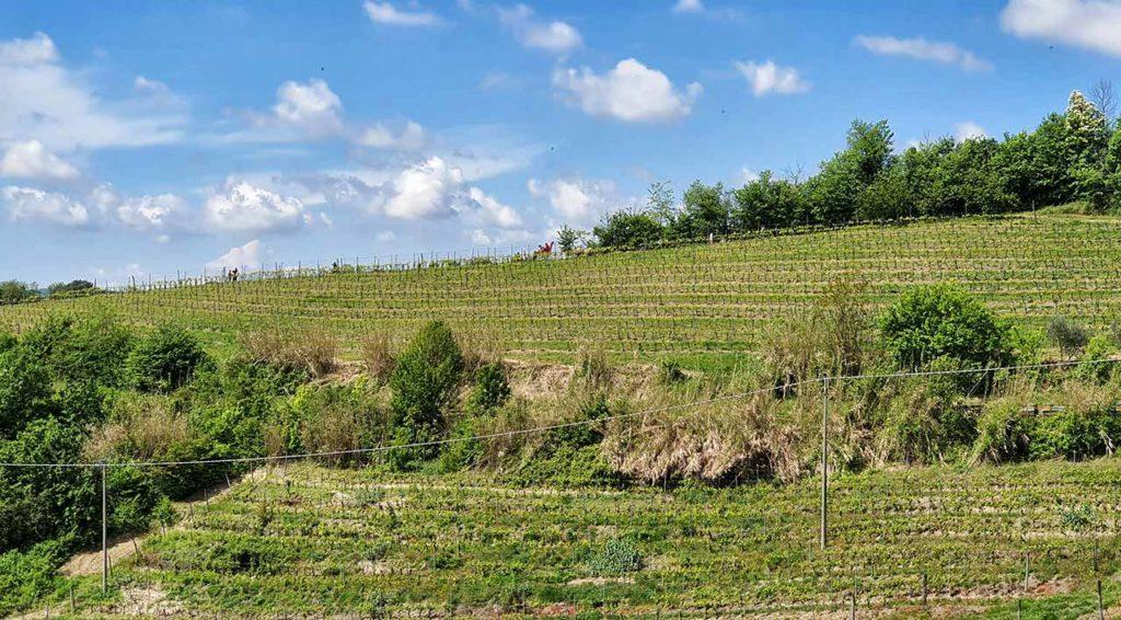 La collina dove è posizionata la Big Bench di Rosignano